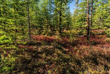 Forest colors (Photo: Tom Pfeiffer)