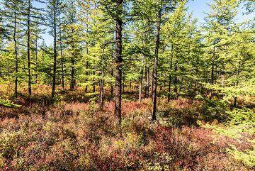 kamchatka_k25243.jpg (Photo: Tom Pfeiffer)