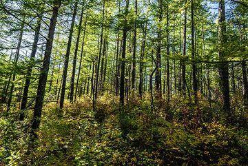 kamchatka_k25247.jpg (Photo: Tom Pfeiffer)