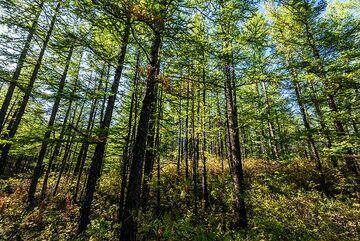 Forest (Photo: Tom Pfeiffer)