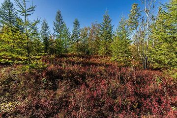 Autumn in the forest (Photo: Tom Pfeiffer)
