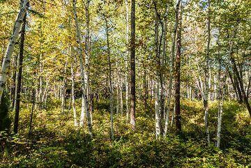 kamchatka_k25263.jpg (Photo: Tom Pfeiffer)