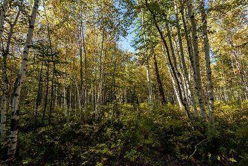 kamchatka_k25264.jpg (Photo: Tom Pfeiffer)