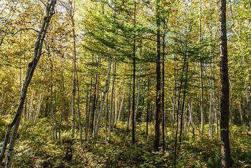 kamchatka_k25265.jpg (Photo: Tom Pfeiffer)