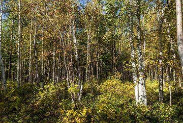 kamchatka_k25269.jpg (Photo: Tom Pfeiffer)
