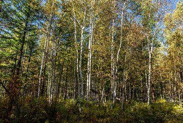 kamchatka_k25270.jpg (Photo: Tom Pfeiffer)