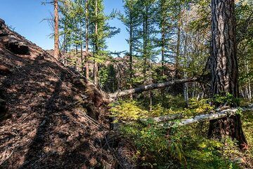 Edge of the 2012-13 lava flow cutting into the forest (Photo: Tom Pfeiffer)