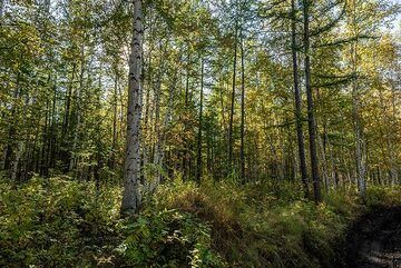 kamchatka_k25287.jpg (Photo: Tom Pfeiffer)