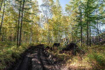 kamchatka_k25288.jpg (Photo: Tom Pfeiffer)