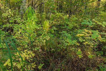 Forest plants (Photo: Tom Pfeiffer)