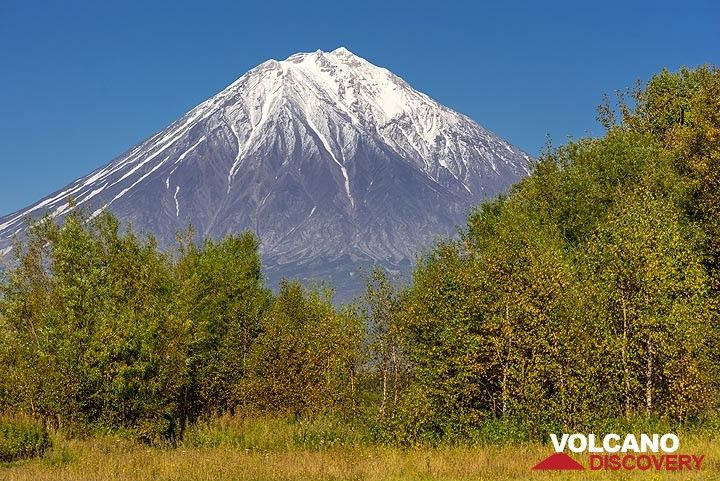 Koryaksky volcano behind a line of trees (Photo: Tom Pfeiffer)