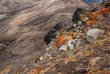 Orange plants and brown soils (Photo: Tom Pfeiffer)