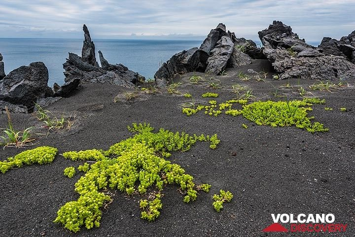 Plants have started to cover the lava surface of Taketomi. (Photo: Tom Pfeiffer)