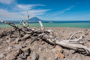 Tree trunk on the beach (Photo: Tom Pfeiffer)