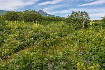 Trail to the caldera rim (Photo: Tom Pfeiffer)