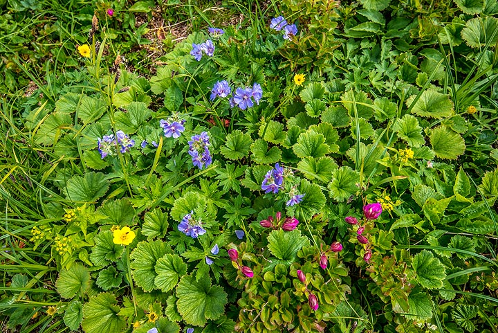 The meadows on the gentle slopes of the caldera are full with wild flowers. (Photo: Tom Pfeiffer)