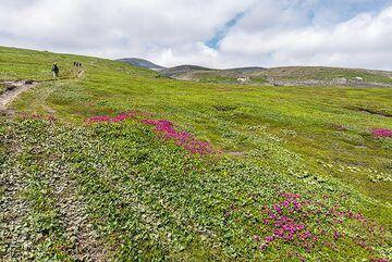 Trail leading to Ebeko volcano. (Photo: Tom Pfeiffer)