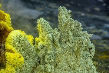Sulphur fingers (Photo: Tom Pfeiffer)
