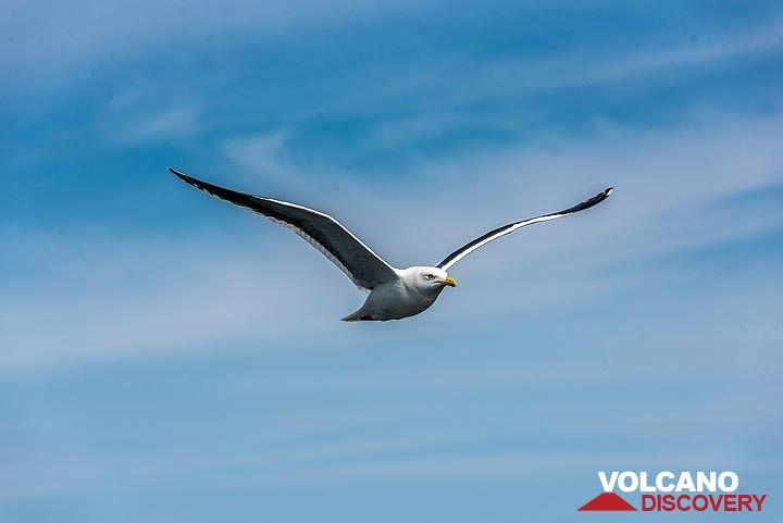 A seagull decides to follow us. (Photo: Tom Pfeiffer)