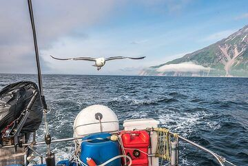 As we continue southwards, we leave Fuss volcano behind, but our seagull friend stays with us. (Photo: Tom Pfeiffer)