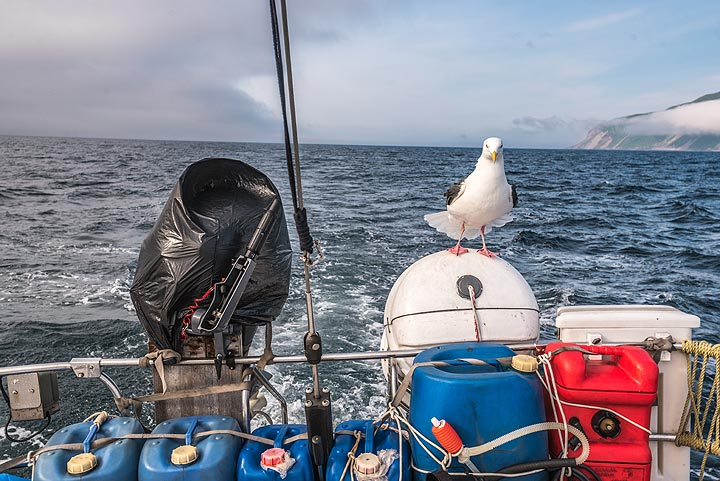The seagull will sit still and travel with us for quite a while, effectively saving several miles of voyage. (Photo: Tom Pfeiffer)