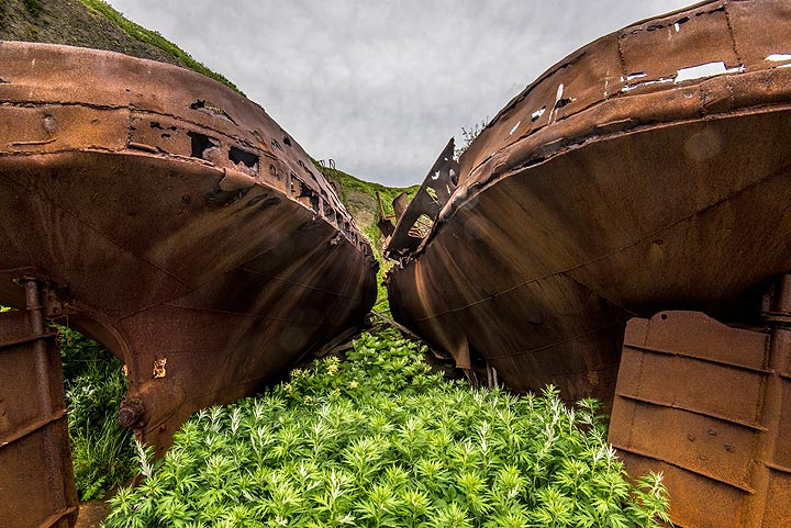 Grass and other plants grow between the abandoned shipwrecks (Photo: Tom Pfeiffer)