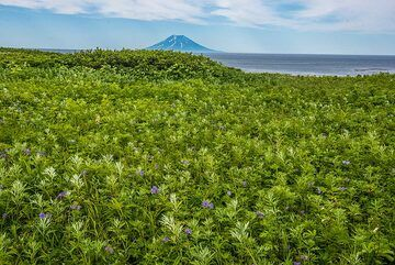 View over the meadow towards Alaid volcano (Photo: Tom Pfeiffer)