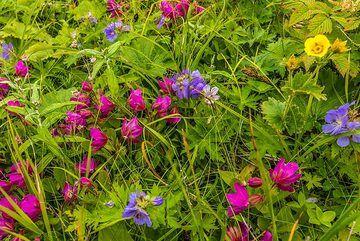 Purple and violet flowers (Photo: Tom Pfeiffer)