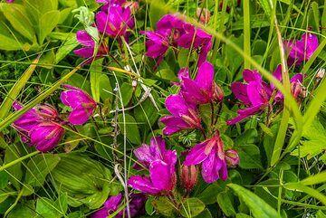 Purple flowers (Photo: Tom Pfeiffer)
