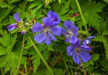 Violet flowers (Photo: Tom Pfeiffer)