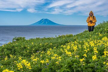 Yellow flowers with Alaid in the background (Photo: Tom Pfeiffer)