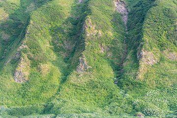 Erosion gullies cut through the ignimbrite deposit at the coast. (Photo: Tom Pfeiffer)