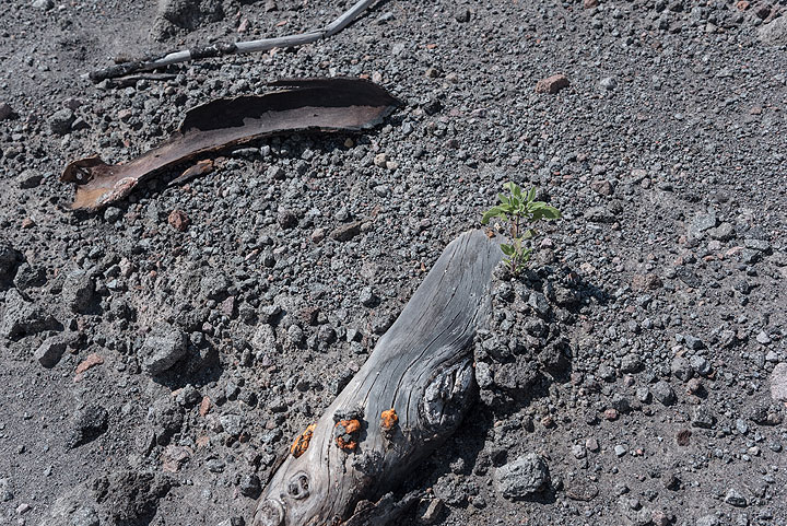 New life often starts at the dead wood pieces. (Photo: Tom Pfeiffer)