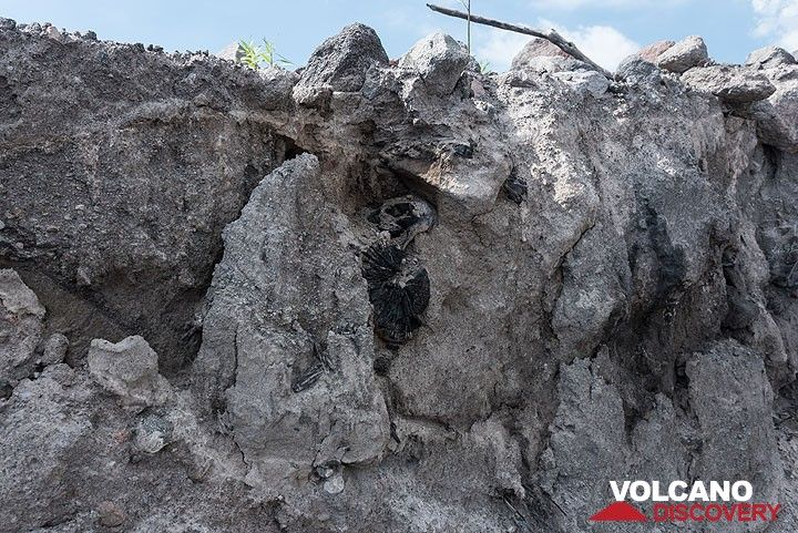 The latest erosion allows to study fresh cross-sections of the pyroclastic flow deposit. (Photo: Tom Pfeiffer)