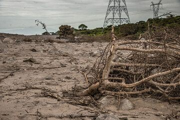 The force of the pyroclastic flow knocked over trees and bushes. (Photo: Tom Pfeiffer)