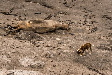 A little dog has nowhere to go (we took him with us). (Photo: Tom Pfeiffer)