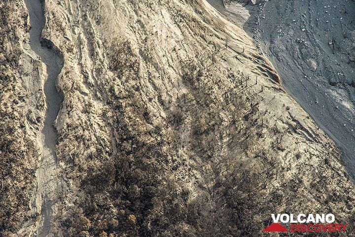 Vertical view onto a zone at the foot of the volcano devastated by pyroclastic flows (unrooted and stripped trees, white ash deposits etc). (Photo: Tom Pfeiffer)