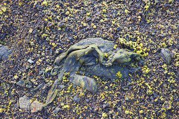 Lava bomb on the ground. (Photo: Tom Pfeiffer)