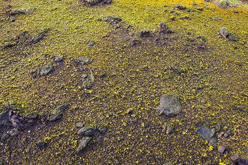 Sulfur crystals have formed almost everywhere on the ground near the rim of the cone. (Photo: Tom Pfeiffer)