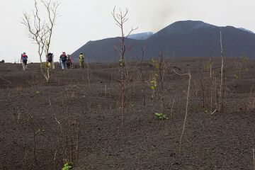 The area around the cone is covered with almost a meter of scoria and looks like waves. Trees have been stripped their leaves and smaller branches when the heavy rain of hot scoria from the lava fountains took place, but surprisingly seem to recover already, as small green new leaves start growing here and there. (Photo: Tom Pfeiffer)