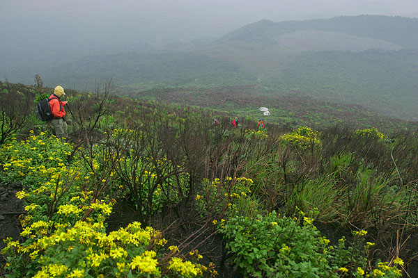 Flowers and grass on the trail descending from the volcano. (Photo: Tom Pfeiffer)