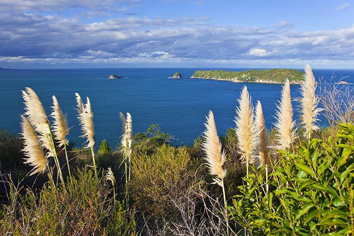 Coastal scenery at Cathedral Cove, Hahei (Coromandel Peninsula, New Zealand) (Photo: Tom Pfeiffer)