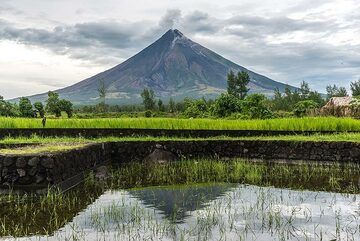 Mayon volcano mirrored in a flooded rice field (Photo: Tom Pfeiffer)