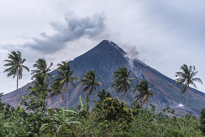 25 Feb afternoon: Mayon volcano behind a row of palm trees. (Photo: Tom Pfeiffer)