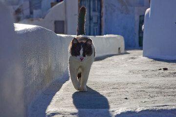 santorini_i32358.jpg (Photo: Tom Pfeiffer)