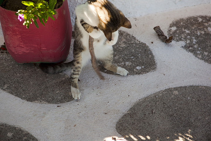 Young cat playing (Photo: Tom Pfeiffer)