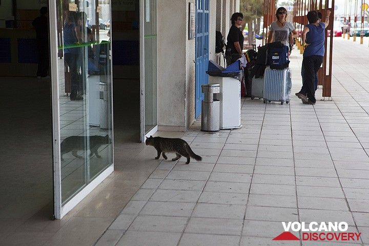 Cat going (in)to the airport (Photo: Tom Pfeiffer)