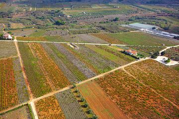 Fields near Marcopoulo (Athens airport) (Photo: Tom Pfeiffer)