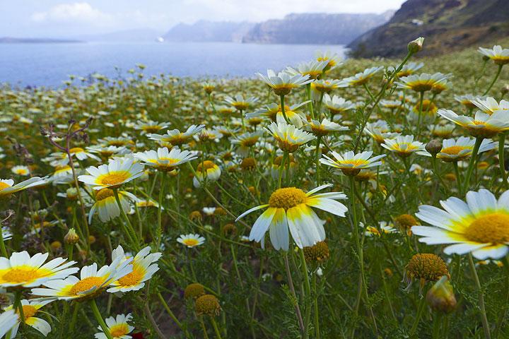 Spring-time on Santorini Island, Greece (Photo: Tom Pfeiffer)