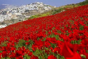 Santorini tour May 2012 - Profitis Ilias, Vlichada, Balos (Photo: Tom Pfeiffer)